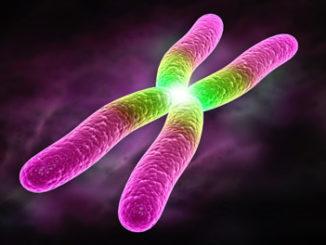 chromatin assay epigenetics