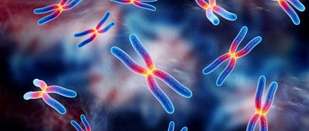epigenetic inheritance histone methylation