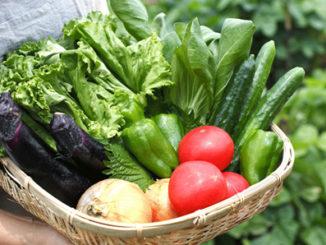 Could-Epigenetics-Help-Feed