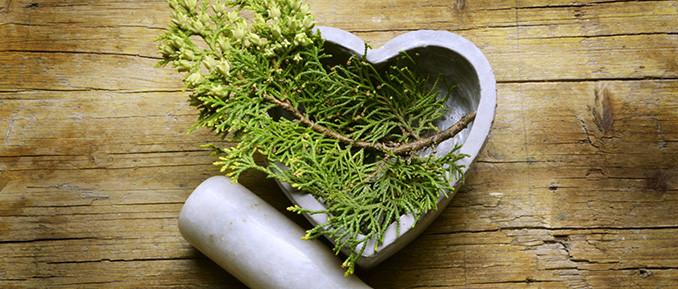 Epigenetic Benefits of Cypress Tree Chemical Hinokitiol