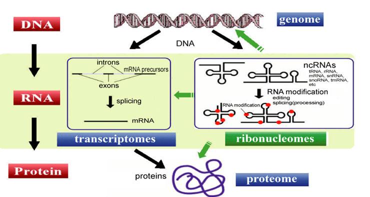 Non Coding Rna What Is Epigenetics