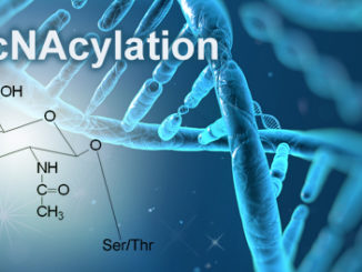 o-GlcNAcylation epigenetic mechanism joins methylation, acetylation, phosphorylation, ubiquitinylation and other epigenetic modifications