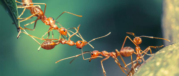 Epigenetics, DNA Methylation Influences Continuous Variation in Ant Worker Size