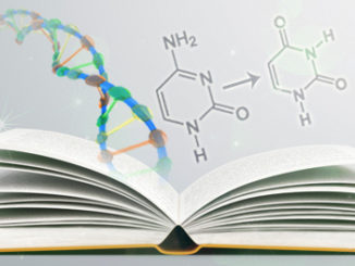 bisulfite conversion protocol epigenetics