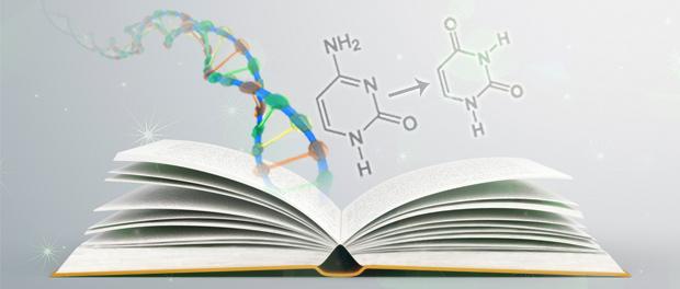 A Researcher's Guide to Successful DNA Bisulfite Conversion