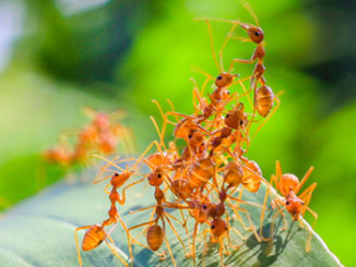 Histone Deacetylase (HDAC) and Histone Acetyltransferase (HAT) Inhibitors Reprogram Social Behavior in Carpenter Worker Ants
