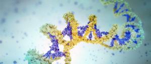 circulating cell free DNA