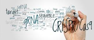 Editing DNA methylation using CRISPR/Cas9