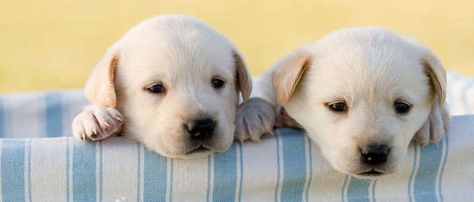 Dogs Exposed to BPA Give Us Epigenetic Clues About Our Own Wellbeing