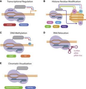 crispr-cas9-epigenome