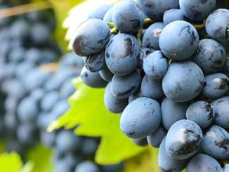 Epigenetics Diet Including Grapes That Might Help Reduce Depression