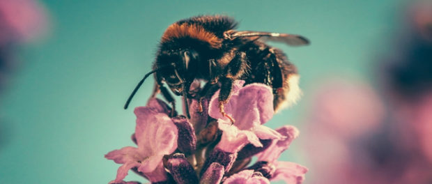 Epigenetics and Diet May Determine Who Becomes Queen Bee