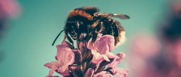 Epigenetics and Diet May Determine Who Becomes Queen Bee