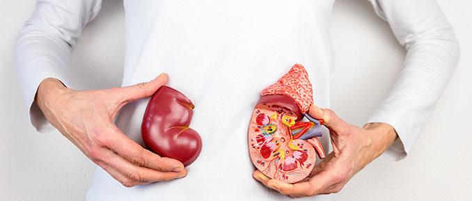 Woman Holding Kidneys Epigenetics