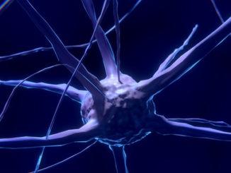 Neurons Epigenetics