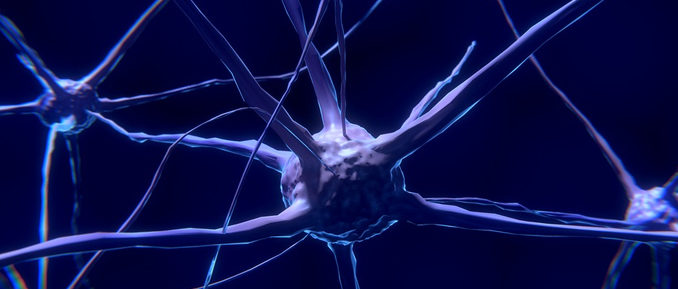Neurons Epigenetics