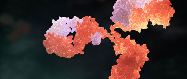 How to Choose an Antibody: For Beginners