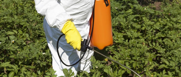 Popular Herbicide May Epigenetically Promote Health Problems In Descendants
