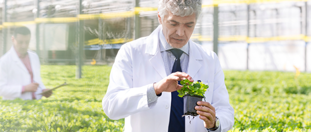 Epigenetic Mechanism Can Repair Plants Damaged By Stress