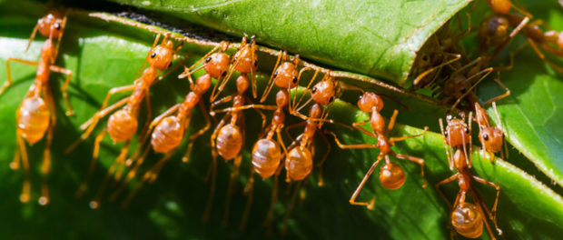 Epigenetic Pathway Found in Ants May Help Explain Human Social Life