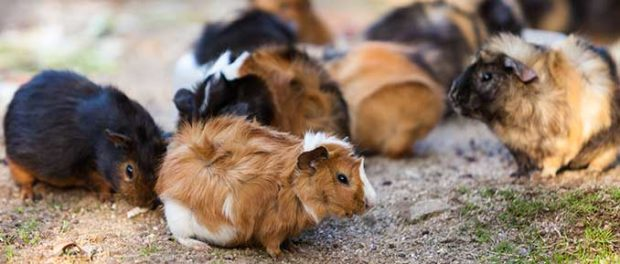Parenteral Nutrition May Alter Epigenetic Marks in Infant Guinea Pigs